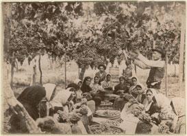 Viña de Dalias sobre 1860