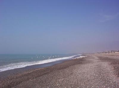 playa-gaviotas