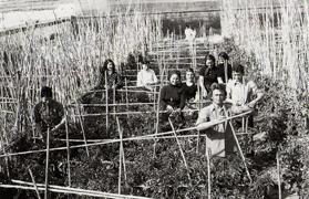 Setos de Tomates - años 60